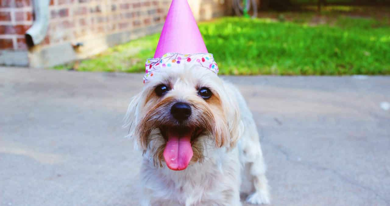 Pet Freebies for Canadians